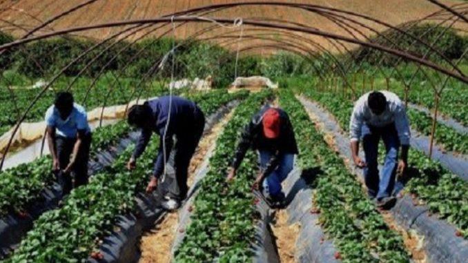 Sostegno per trasporto lavoratori agricoli per contrastare il caporalato